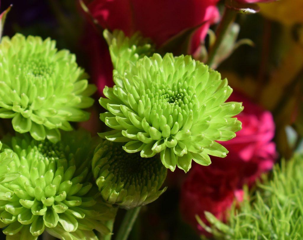 Magnifique fleur verte des artisans fleuristes Sessile