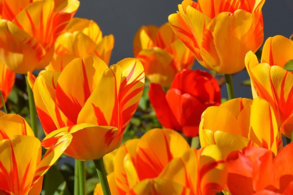 Magnifique fleur orange des artisans fleuristes Sessile