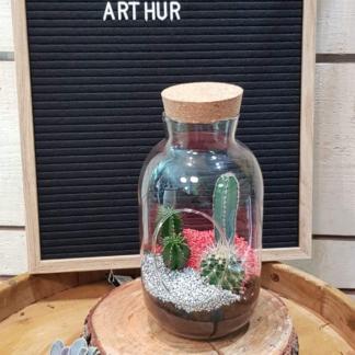 terrarium Arthur