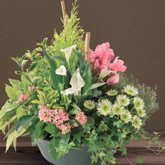 Compositions Florales et végétales extérieures
