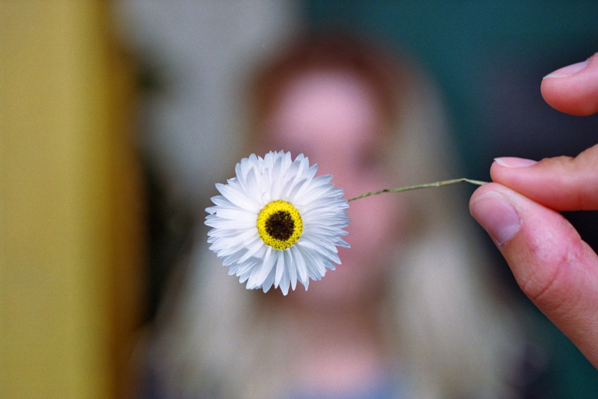 fleuriste boulogne billancourt