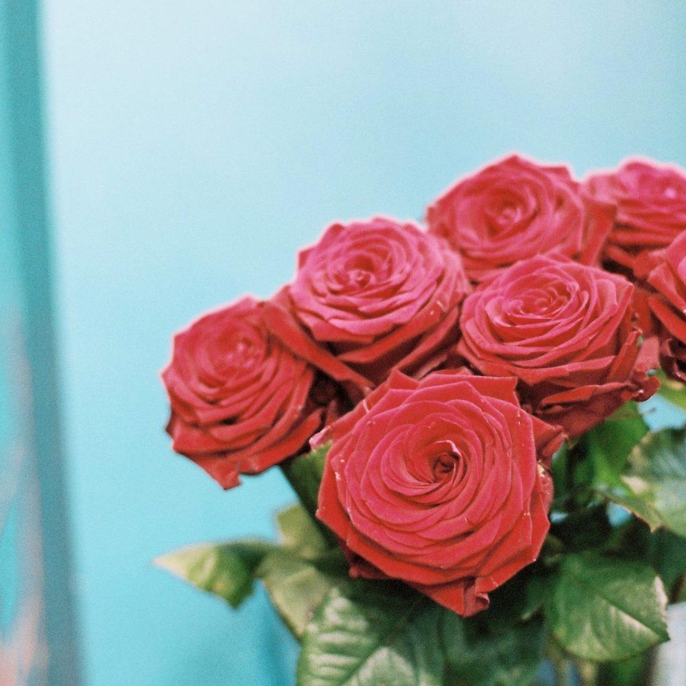 Roses de Jardin D'Antan