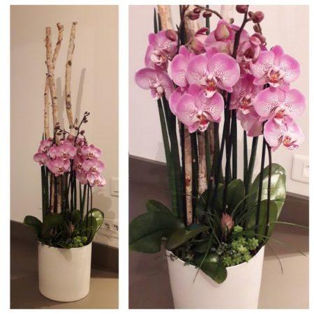 votre artisan fleuriste vous propose le bouquet : Forêt D'Orchidées