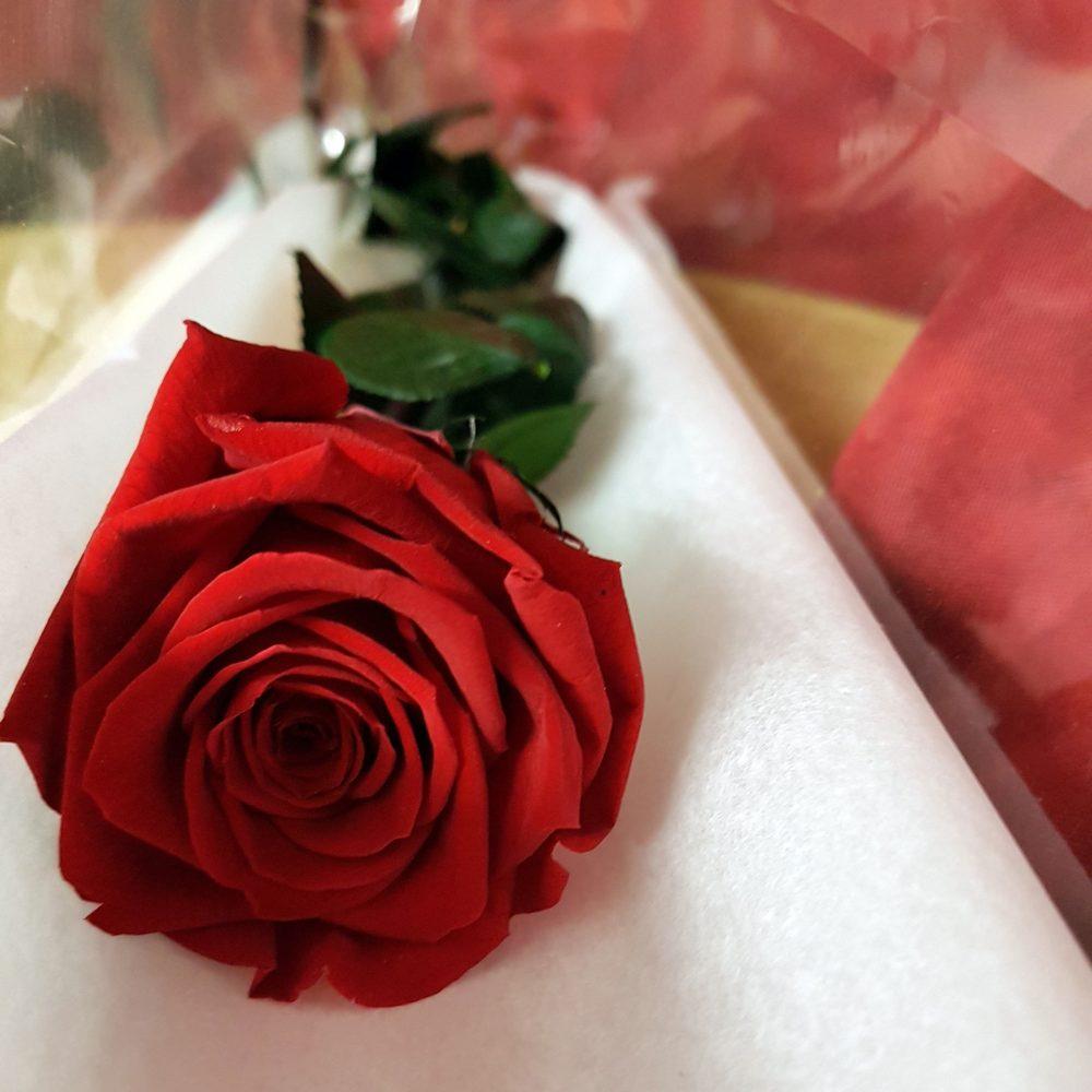 Rose éternelle sur tige