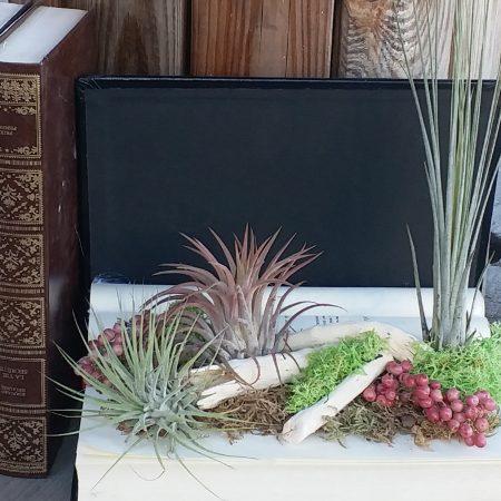 votre artisan fleuriste vous propose le bouquet : Livre Végétal