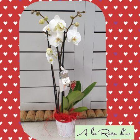 votre artisan fleuriste vous propose le bouquet : Orchidée et cache pot