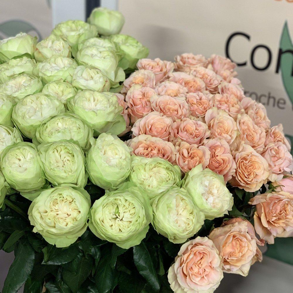Roses de Estel Fleurs