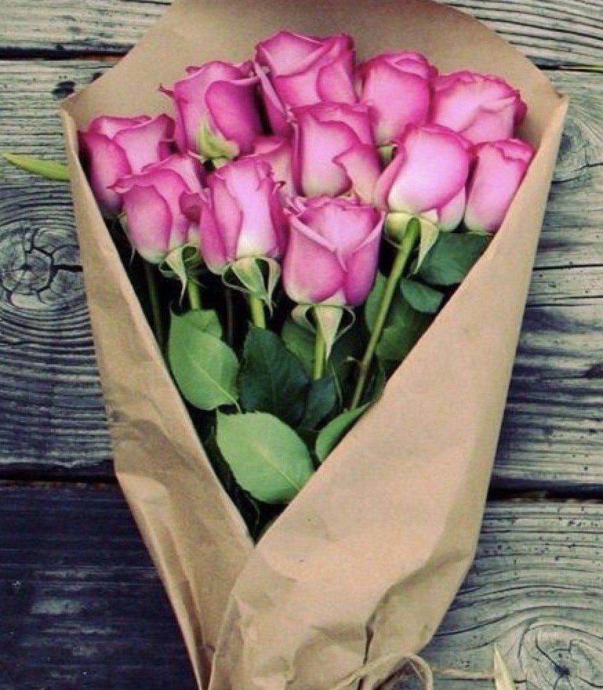 Roses de Jardin D'Hiver