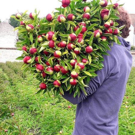 votre artisan fleuriste vous propose le bouquet : Fleurs de saison à la botte