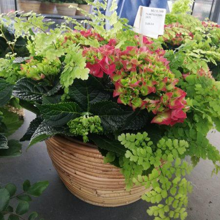 votre artisan fleuriste vous propose le bouquet : Composition d'hortensia