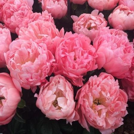 votre artisan fleuriste vous propose le bouquet : Bouquet de pivoines