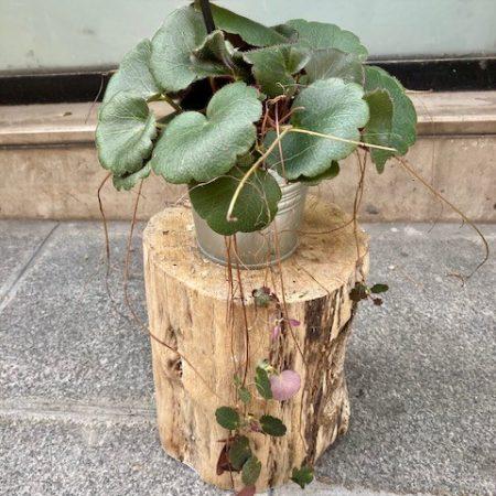 votre artisan fleuriste vous propose le bouquet : Plante Verte