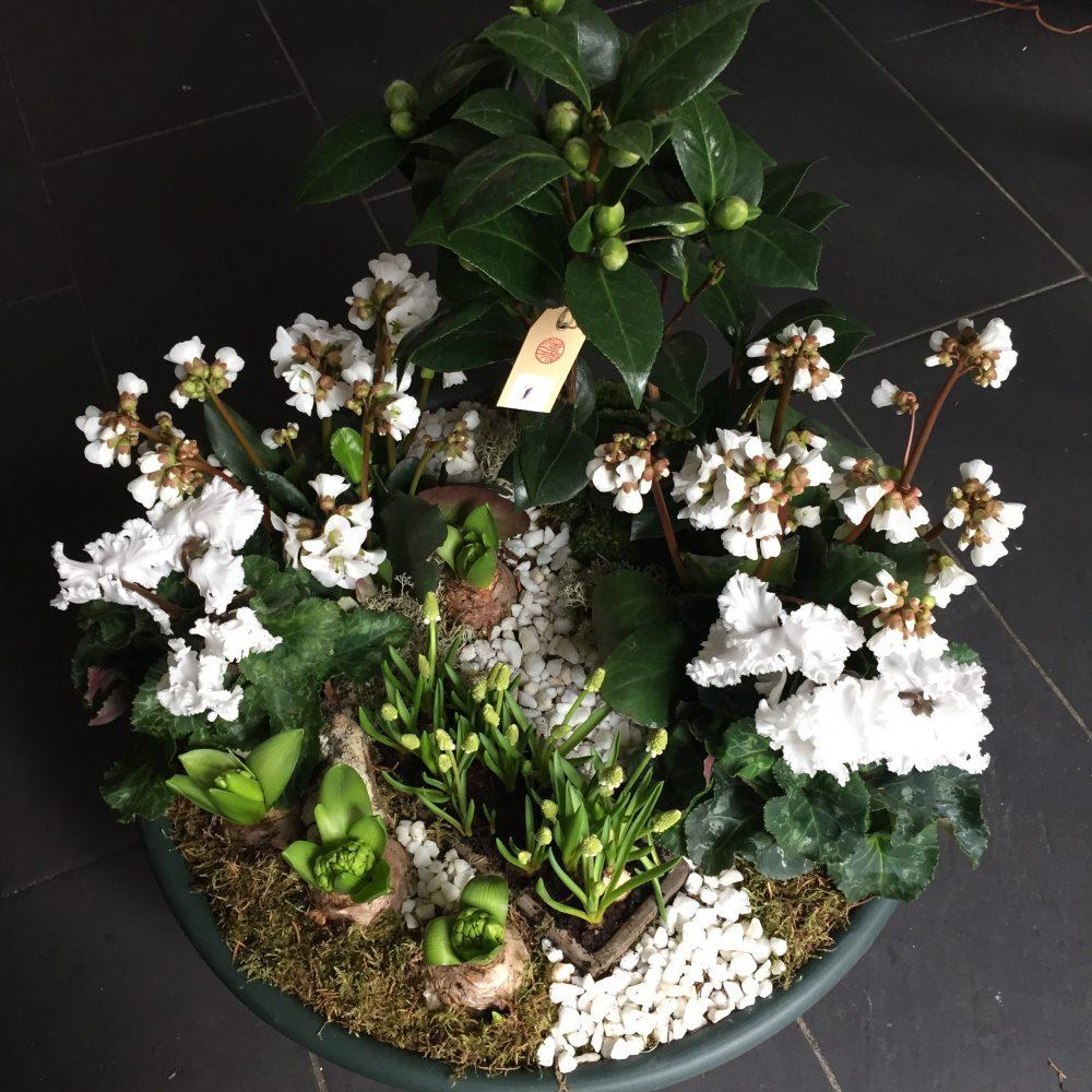 Coupe de plantes extérieures