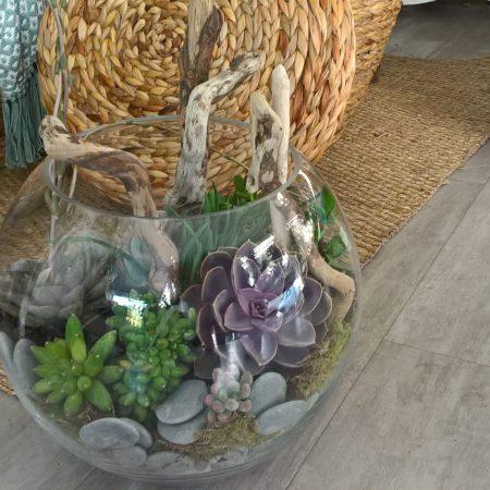 votre artisan fleuriste vous propose le bouquet : Plante Verte Ou Succulente