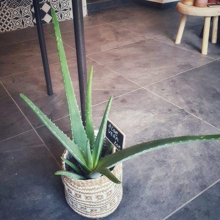 votre artisan fleuriste vous propose le bouquet : Plante Verte Tendance