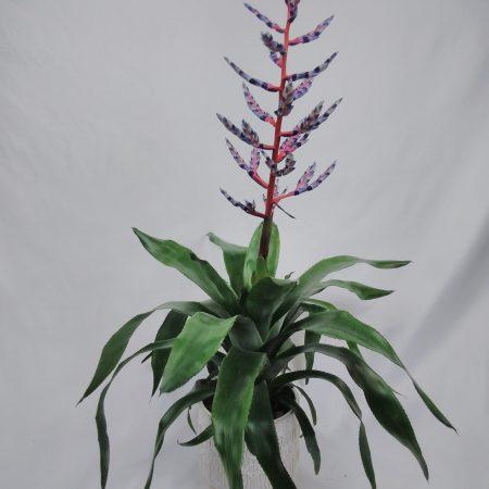 """votre artisan fleuriste vous propose le bouquet : Bilbergia """"Blue Rain"""""""