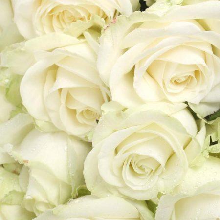 votre artisan fleuriste vous propose le bouquet : Roses de Reve De Fleurs