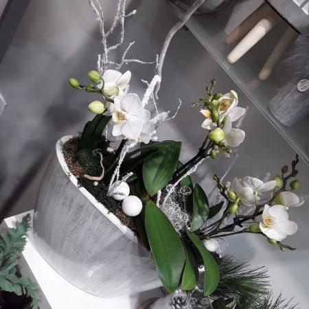 votre artisan fleuriste vous propose le bouquet : Composition Orchidée