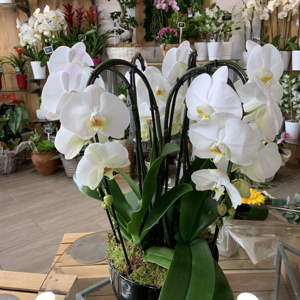 Coupe De 3 Orchidées