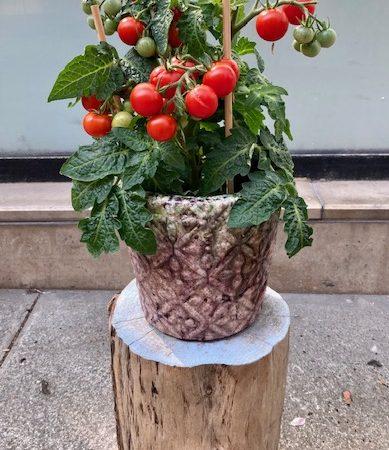 votre artisan fleuriste vous propose le bouquet : Tomates Cerises