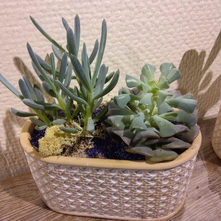 votre artisan fleuriste vous propose le bouquet : Jardin De Succulente