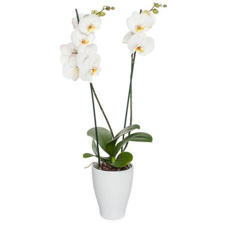 votre artisan fleuriste vous propose le bouquet : L'Orchidée