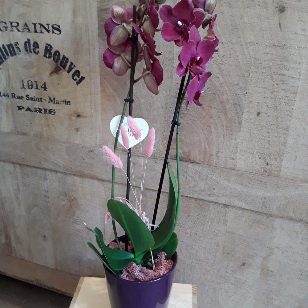 Orchidée Rose Double