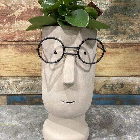 """votre artisan fleuriste vous propose le bouquet : peperonia en cache pot """" tête à lunette"""""""