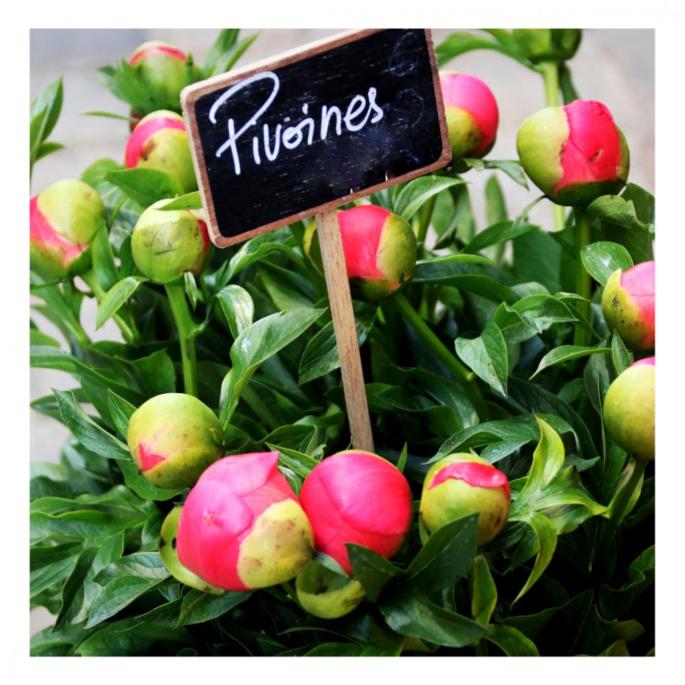 Le bouquet de pivoines (en saison)