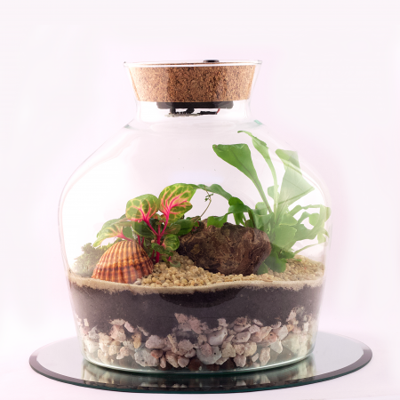 votre artisan fleuriste vous propose le bouquet : Terrarium Tropical M