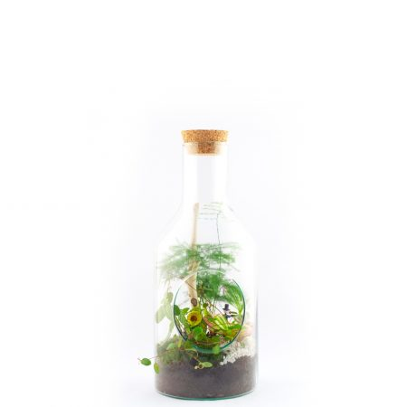 votre artisan fleuriste vous propose le bouquet : Terrarium Tempéré S