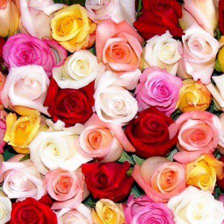 votre artisan fleuriste vous propose le bouquet : Bouquet de Roses couleurs variées