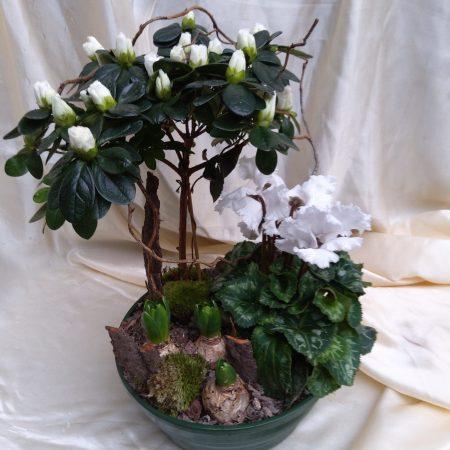 votre artisan fleuriste vous propose le bouquet : Assemblage De Plante Pour L Exterieur