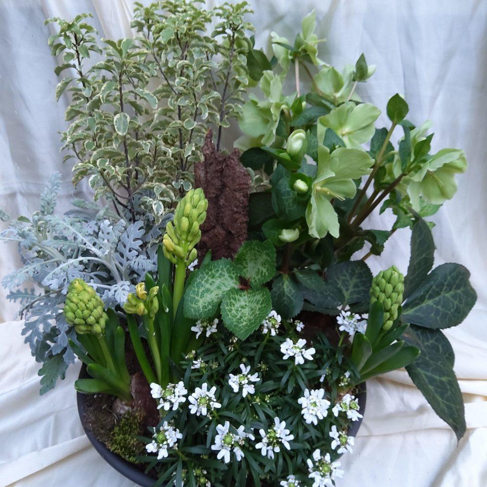 Assemblage Plante Pour L Exterieur