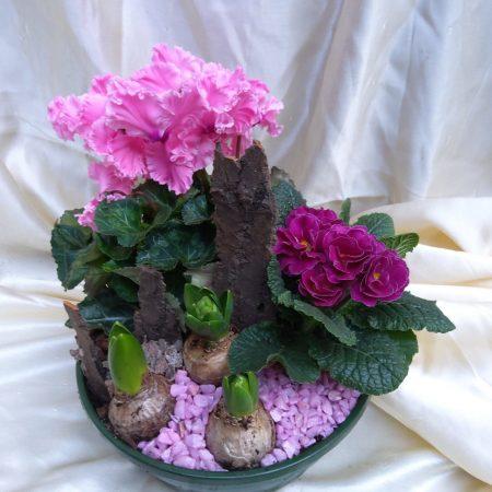 votre artisan fleuriste vous propose le bouquet : Assemblage De Plante Exterieure