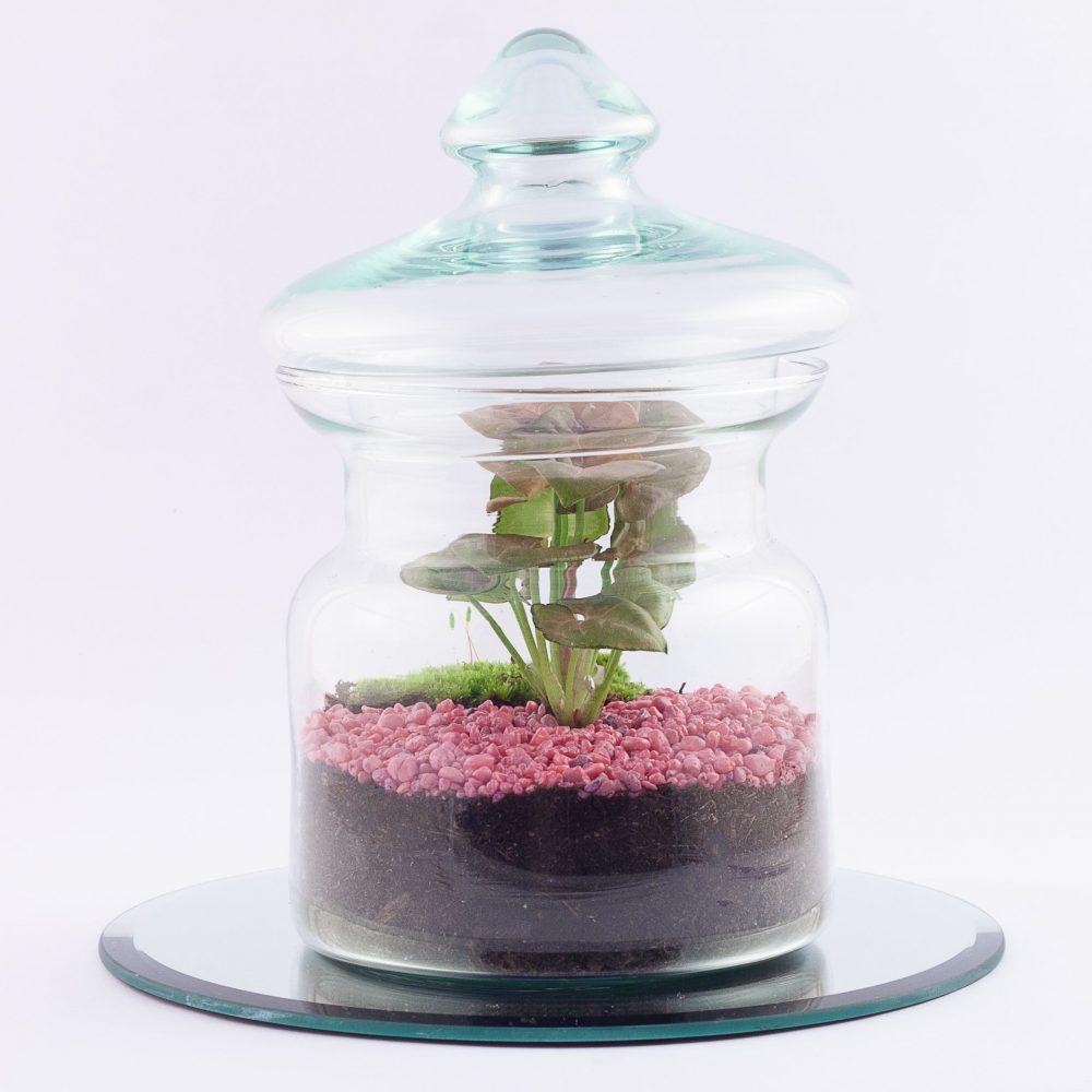 Baby Terrarium