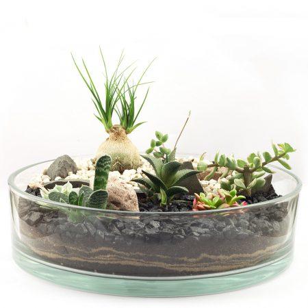 votre artisan fleuriste vous propose le bouquet : Terrarium Aride Taille L