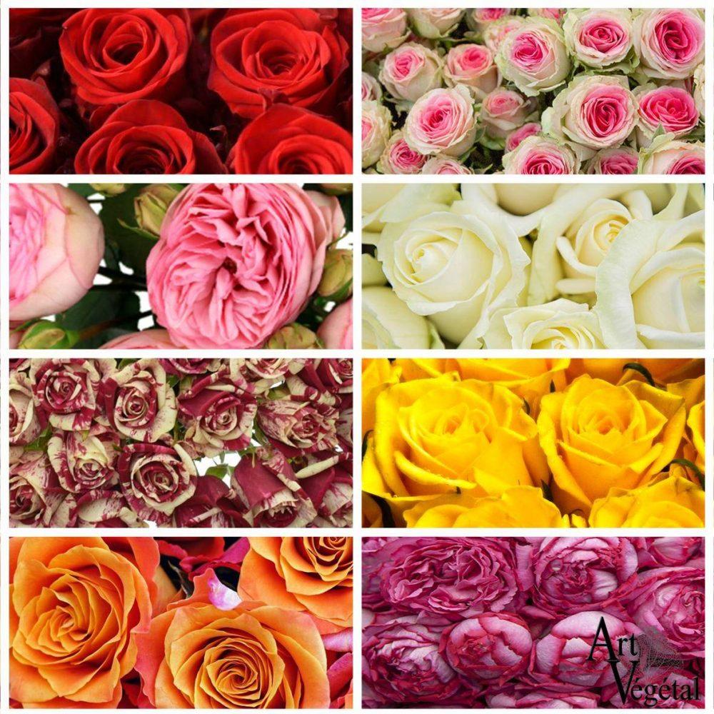 Bouquet De Rose À L'Unité (50cm)