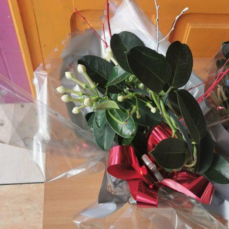 votre artisan fleuriste vous propose le bouquet : Jasmin De Madagascar