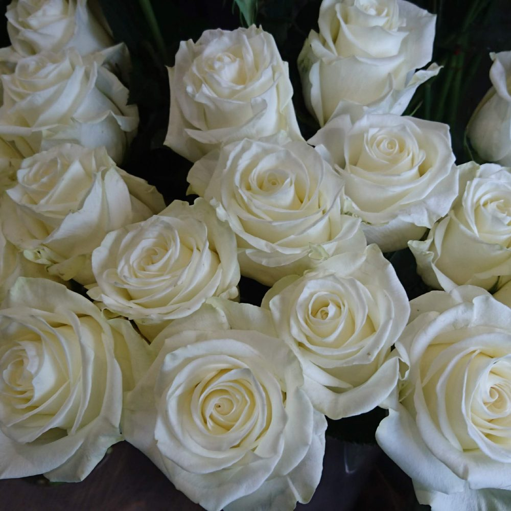 Roses Blanches Gros Boutons
