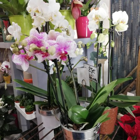 votre artisan fleuriste vous propose le bouquet : Orchidées (Phalaenopsis)