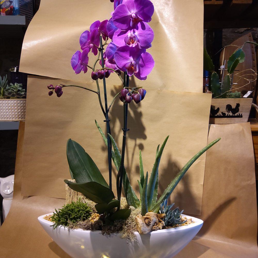 Coupe Avec Phalenopsis 2 Branches Et Succulente
