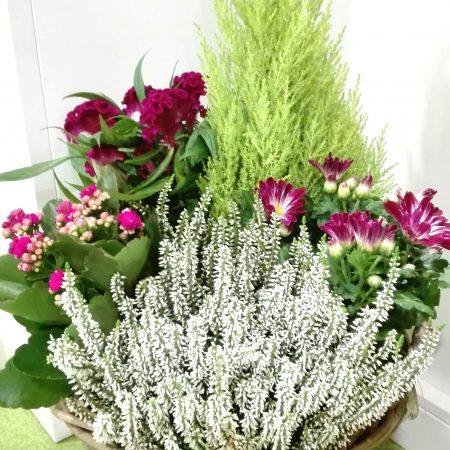 votre artisan fleuriste vous propose le bouquet : Panier de plantes deuil