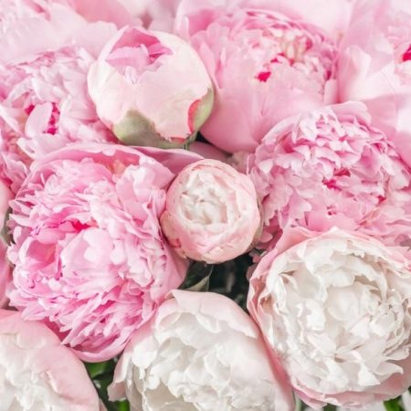 votre artisan fleuriste vous propose le bouquet : Nos belles pivoines
