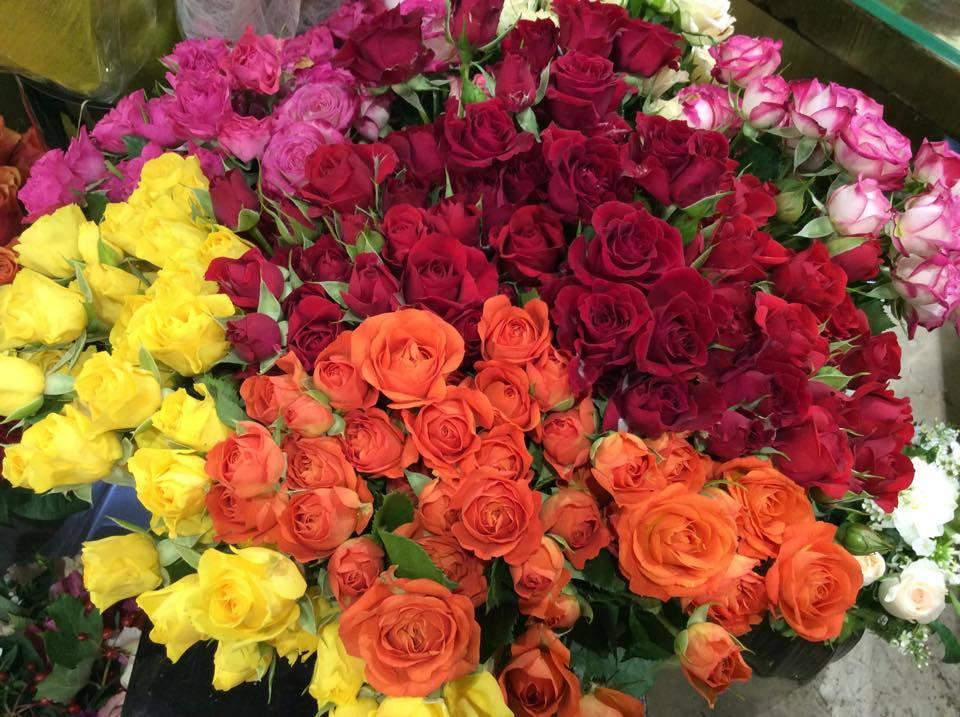 Roses de Jacques Blanchon Fleuriste Le Chesnay-Rocquencourt