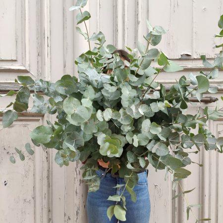 votre artisan fleuriste vous propose le bouquet : Bouquet d'eucalyptus du midi