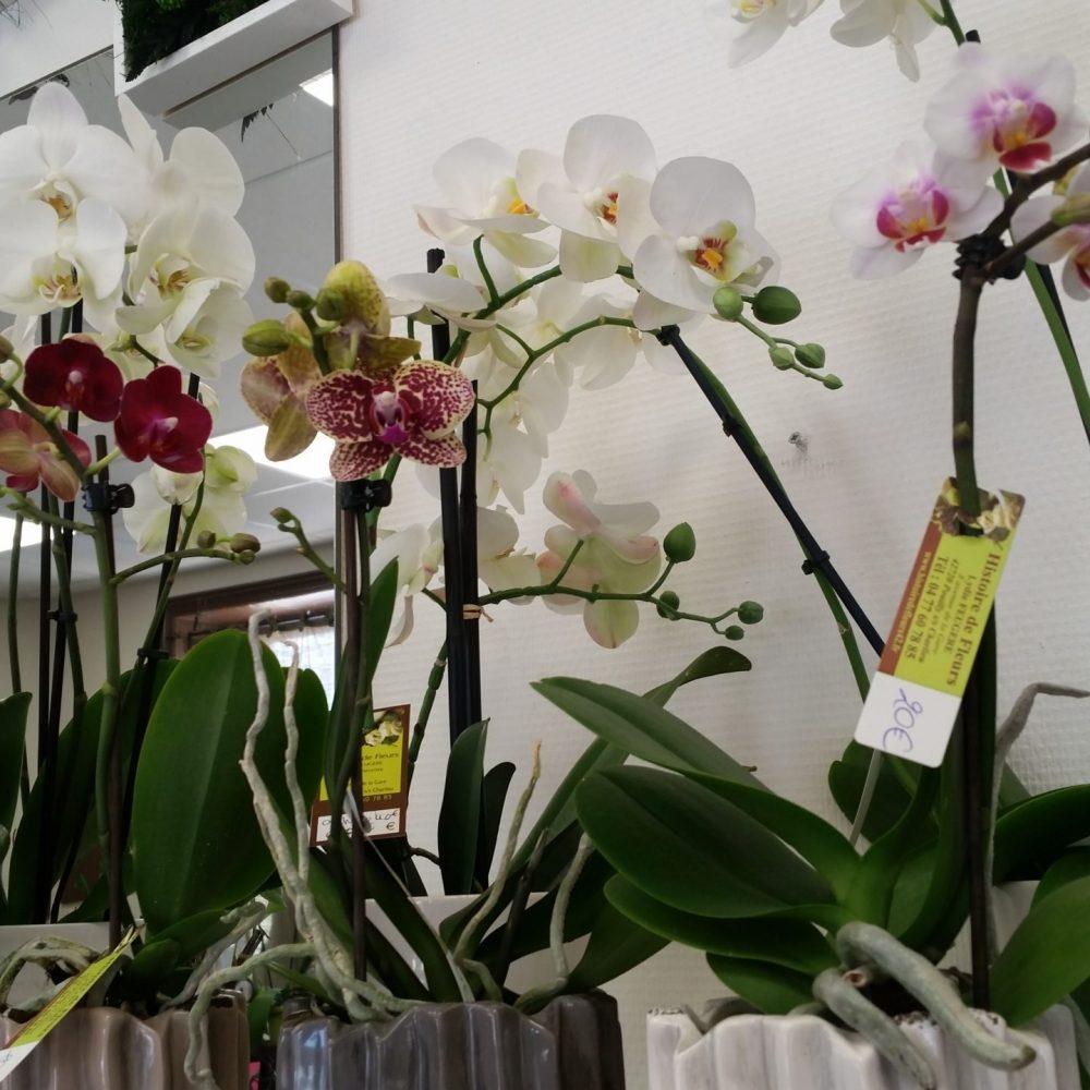 Orchidée avec cache-pot