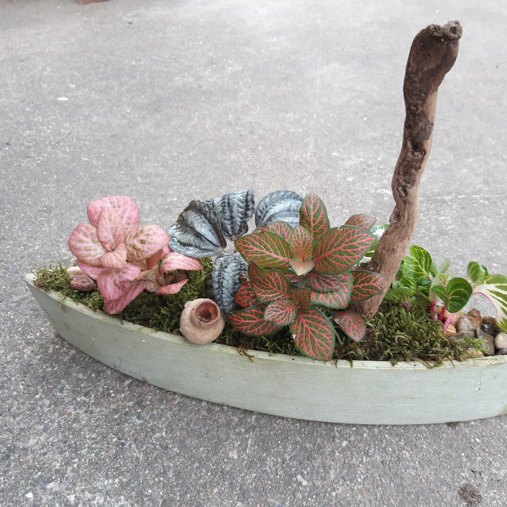 Composition de plantes d'intérieur
