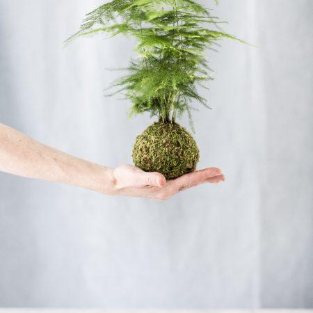 votre artisan fleuriste vous propose le bouquet : Kokedama