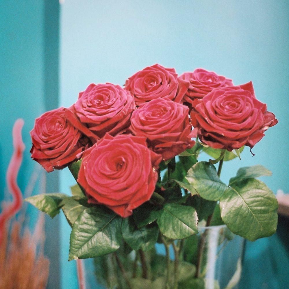 Roses de Vert La Couleur